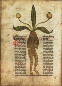 'Gart der Gesundheit', 1485