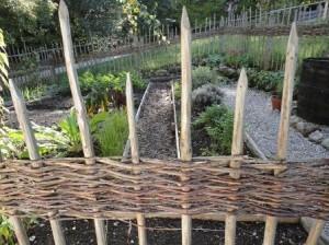 Rosmarin im eigenen Garten