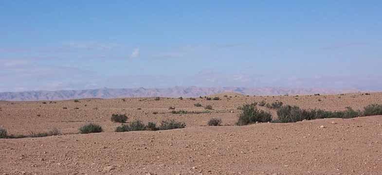 Nordafrikanischer Rosmarin